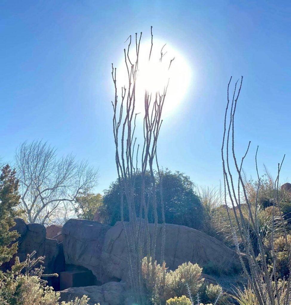 Natalia Planet Arizona02