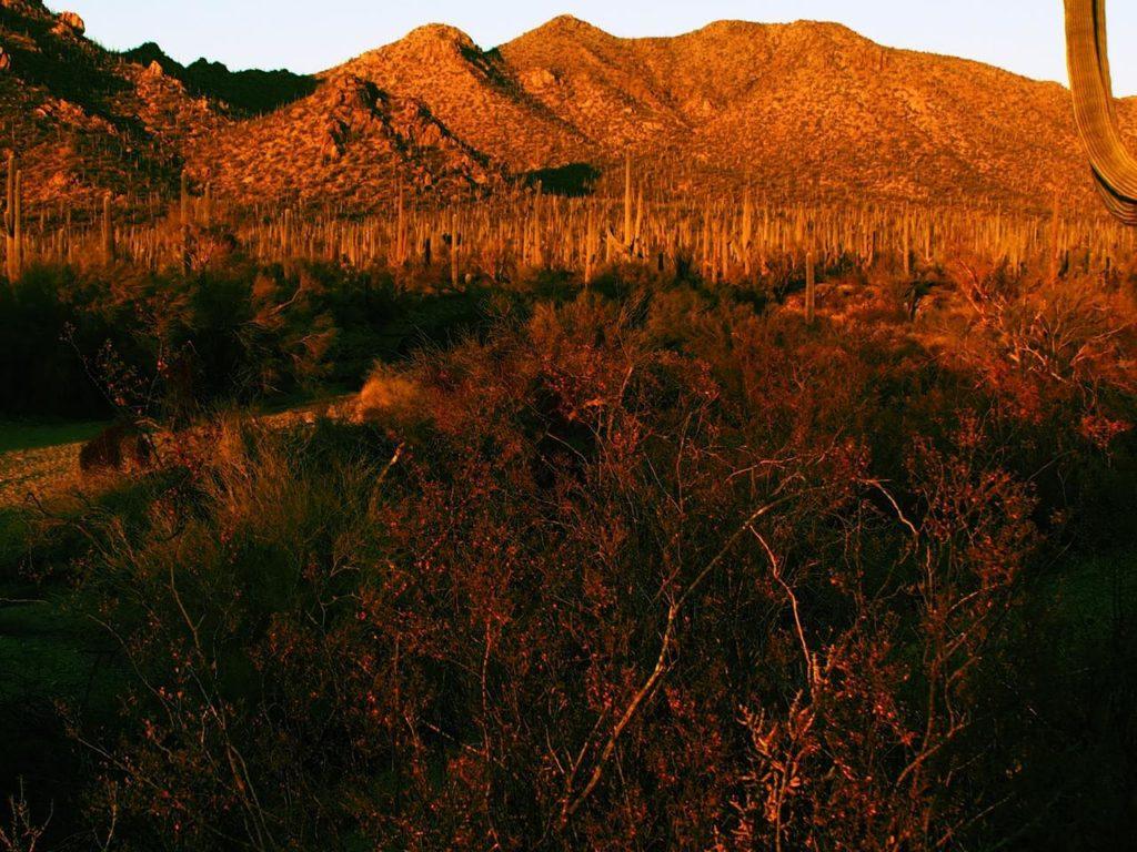 Natalia Planet Arizona14