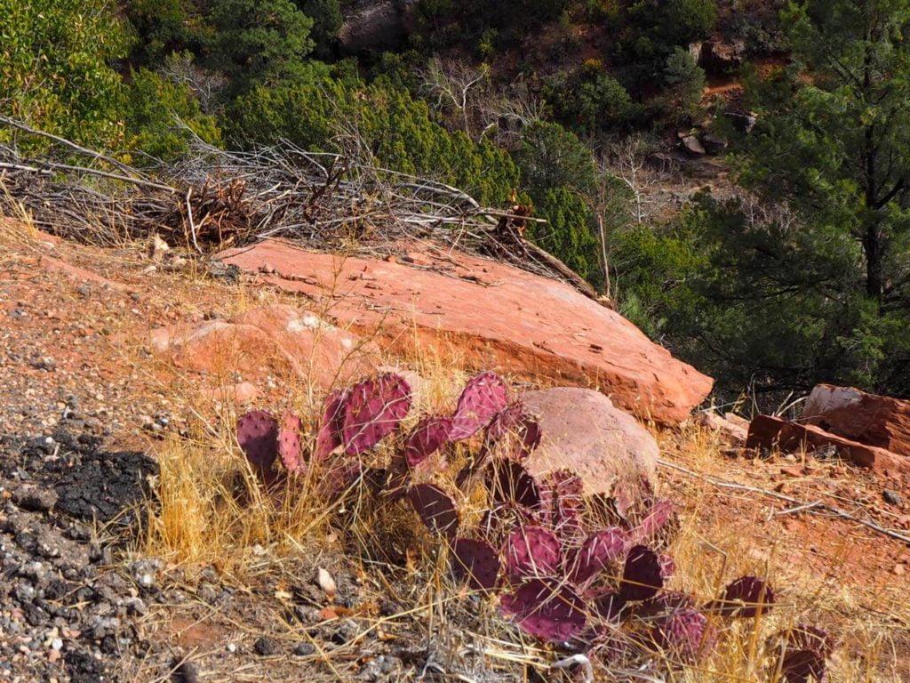 Natalia Planet Arizona34